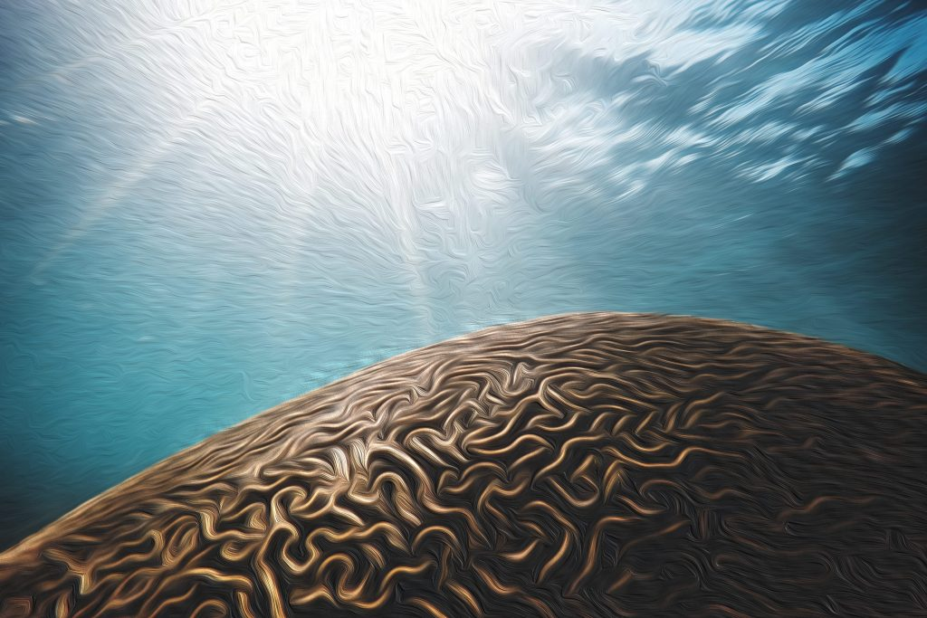 Image of a brain looking coral underwater which is the collective unconscious