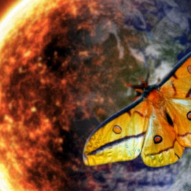 Moth vs Flame: Reason, Instinct and Humanity's Struggle toSurvive Why moths fly into flames and what it has to do with the end ofhumanity- 7 min read